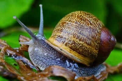 Schnecke, Schalentieren, ffnung, Wirbellosen, Schnecke, Schleim, Insekt