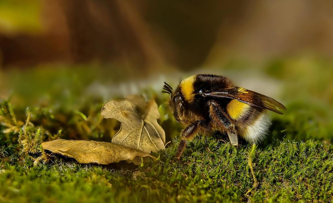 wildlife, animal, wild, bee, leaf, macro, nature, insect, grass, arthropod