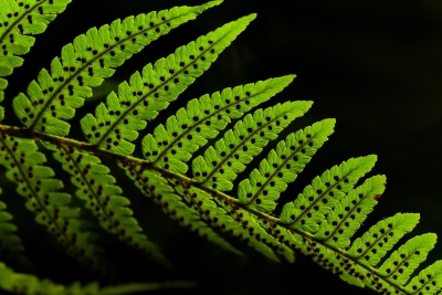 leaf, flora, fern, nature, texture, plant, foliage, dark