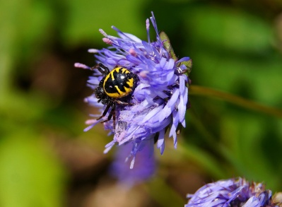 nature, insect, flower, summer, beetle, leaf, garden, wild, herb