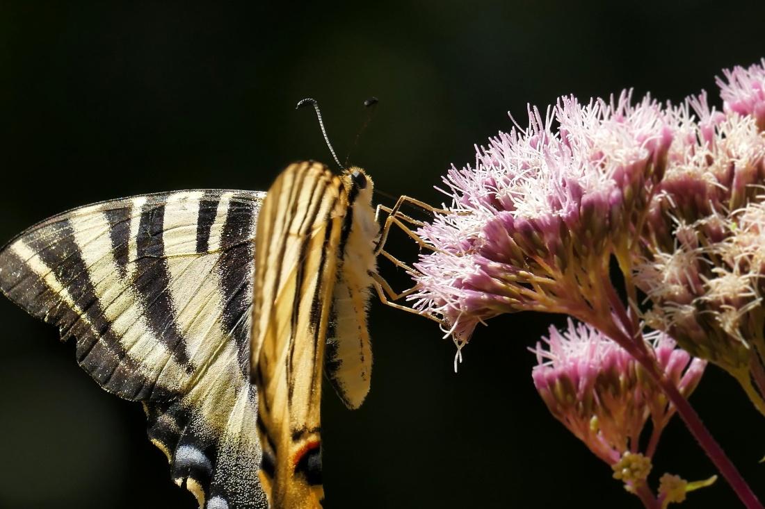 nature, insect, flower, butterfly, macro, detail, pistil, pollen, vegetation