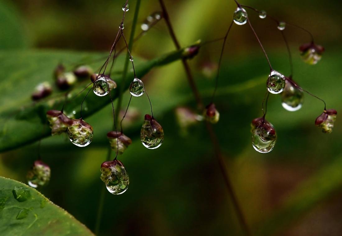 lehtiä, flora, kaste, luonnosta, kaste, sade, branchlet