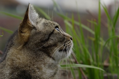 cat, animal, nature, fur, wildlife, feline, pet, kitten
