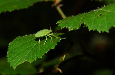 insect, leaf, invertebrate, nature, plant, beetle, macro, detail