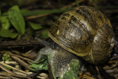 shell, snail, invertebrate, gastropod, animal, macro, nature, wildlife