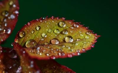 nature, goutte d'eau, macro, feuilles, pluie, flore, rosée