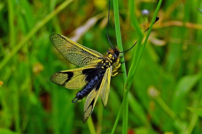 nature, dragonfly, macro, insect, grass, arthropod