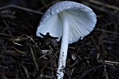 fungo, fungo, natura, legno, veleno, tossico, muschio, selvaggio, flora
