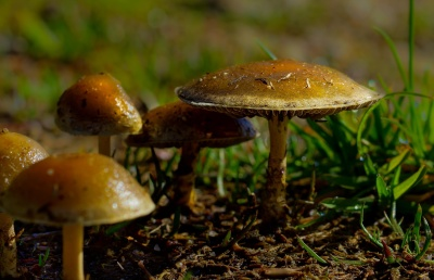 mushroom, fungus, moss, wood, herb, nature, spore, poison, vegetable