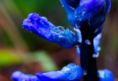 fleur, nature, flore, jardin, rosée, pluie, pétale, macro