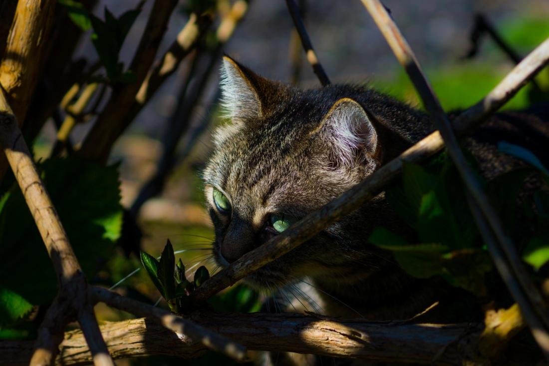 nature, animal, pet, domestic cat, grass, playful