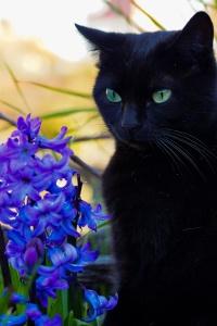 natura, pisica, animale, portret, flori, frumoase, pisica, flori
