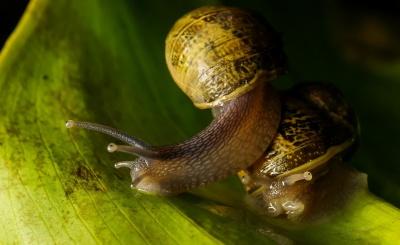 カタツムリ、巻貝、無脊椎動物、スラグ、マクロ、スライム、自然