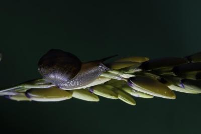 자연, 매크로, 민 달팽이, 점액, 정원, 무척추동물