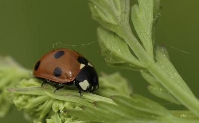 葉、昆虫、自然、雨、結露、フローラ、カブトムシ、てんとう虫、節足動物