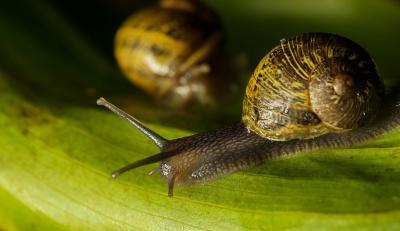 달팽이, gastropod, 무척추동물, 매크로, 동물, 달팽이 점액