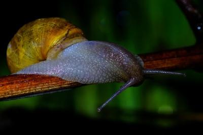 달팽이, gastropod, 무척추동물, 매크로, 민 달팽이, 점액, 정원