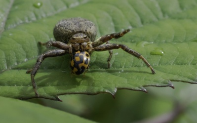 insect, spider, nature, macro, animal, invertebrate, wildlife, arthropod