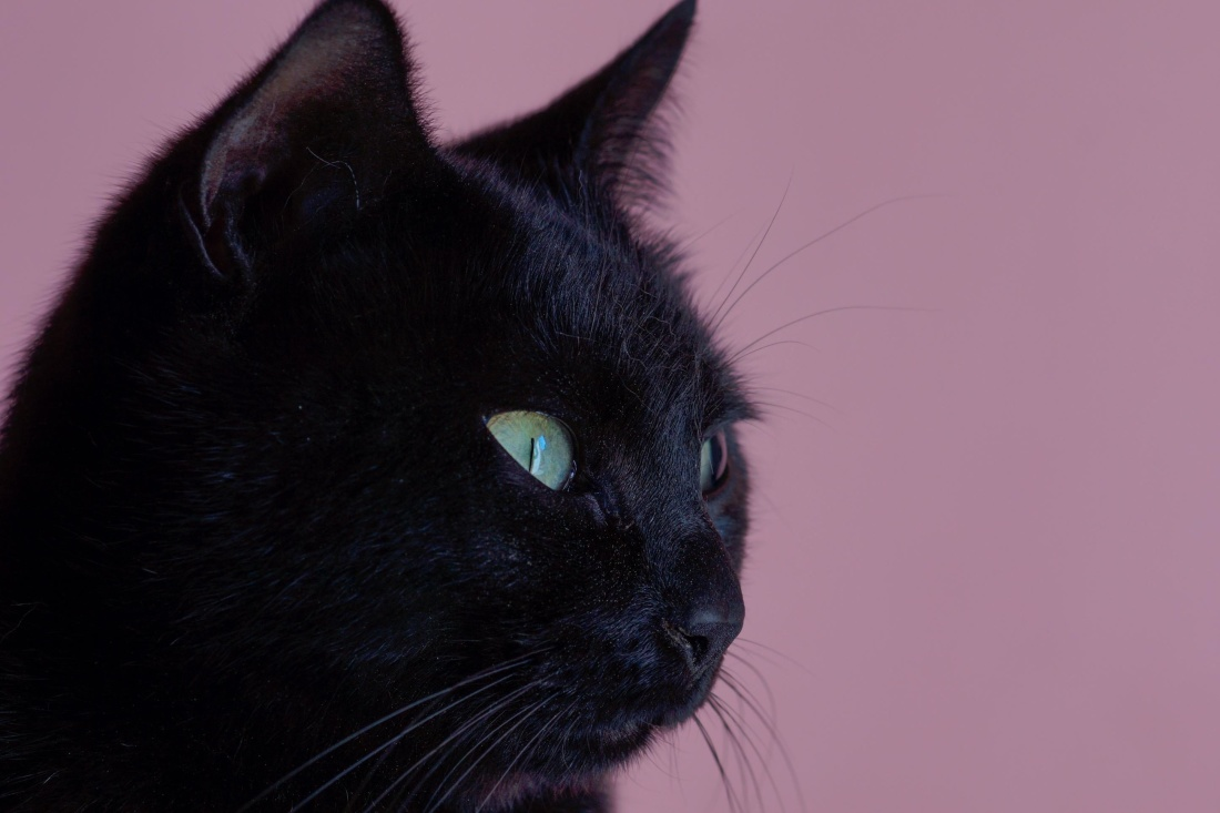 black, cat, portrait, cute, pet, eye, feline, animal, kitty