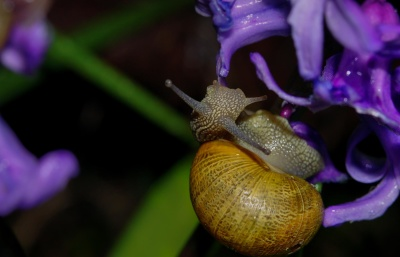 invertebrate, insect, snail, flora, leaf, gastropod, wild, beautiful