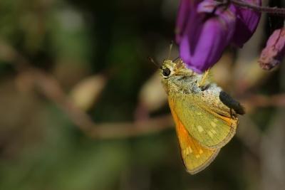 Бабочка, насекомое, макро, детали, моли, природа, цветок, беспозвоночных, дикой природы