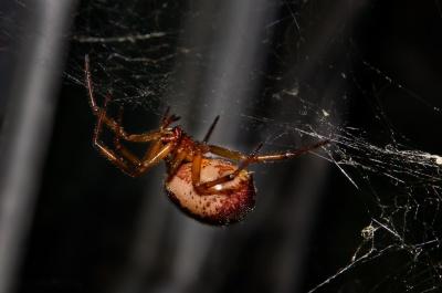 pavouk, pavučina, hmyz, bezobratlých, past, pavučina, nebezpečí