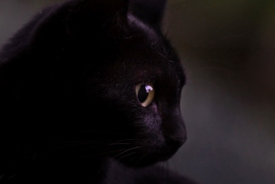 domestic cat, pet, animal, eye, dark, kitten, dark, portrait