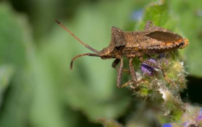 insect, kever, macro, detail, ongewervelden, natuur, dieren in het wild