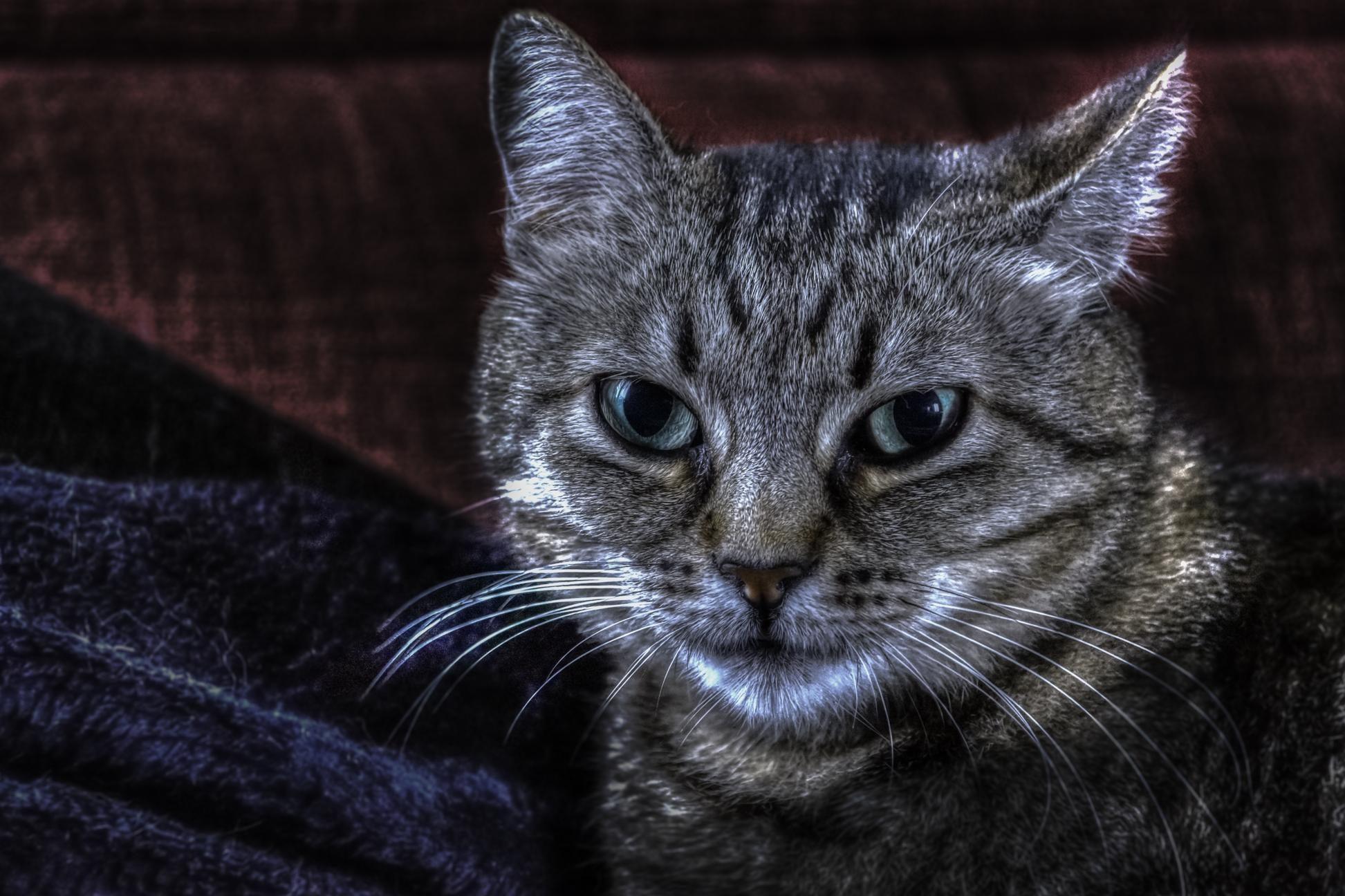 Tmavo čierna mačička obrázky