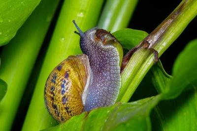 カタツムリ、巻貝、マクロ、無脊椎動物、スラグ、スライム