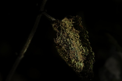dark, shadow, night, leaf, nature, flora