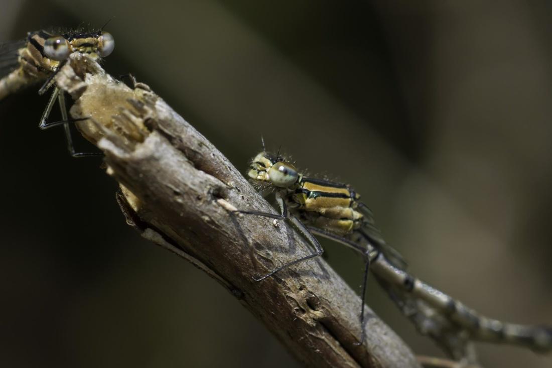 insect, invertebrate, wildlife, dragonfly, nature, animal, macro, detail