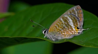 Бабочка, макро, детали, насекомое, природа, беспозвоночных, дикой природы