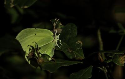 insect, leaf, nature, butterfly, bush, macro, garden, invertebrate, flower