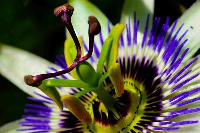 nature, fleurs, été, flore, plante, macro, exotique, pistil, pétale belle,
