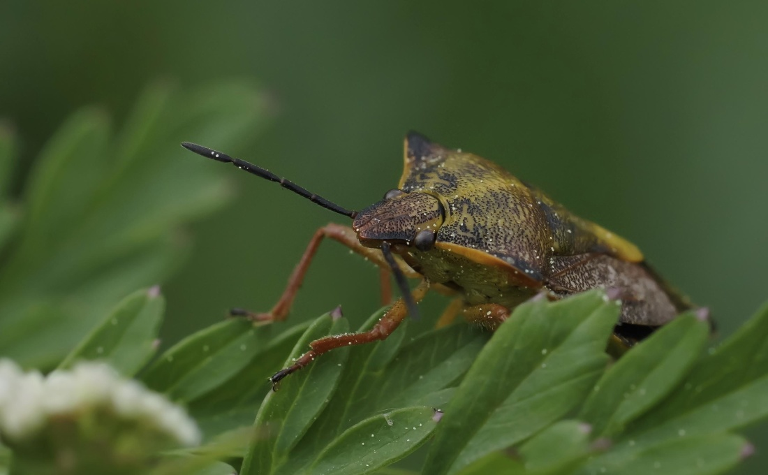 nature, invertebrate, wildlife, beetle, insect, arthropod, macro, animal