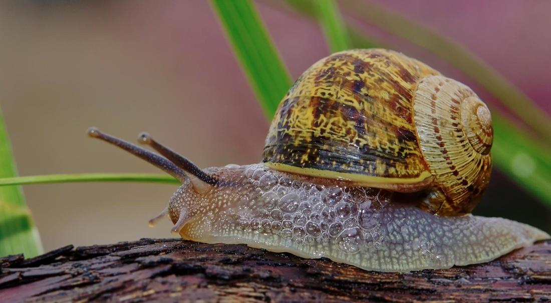 životinja, puž, gastropod, detalj, beskralješnjaka, cjevčica, sluz, ljuske