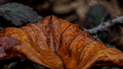 leaf, dry, gound, autumn, flora, macro, detail
