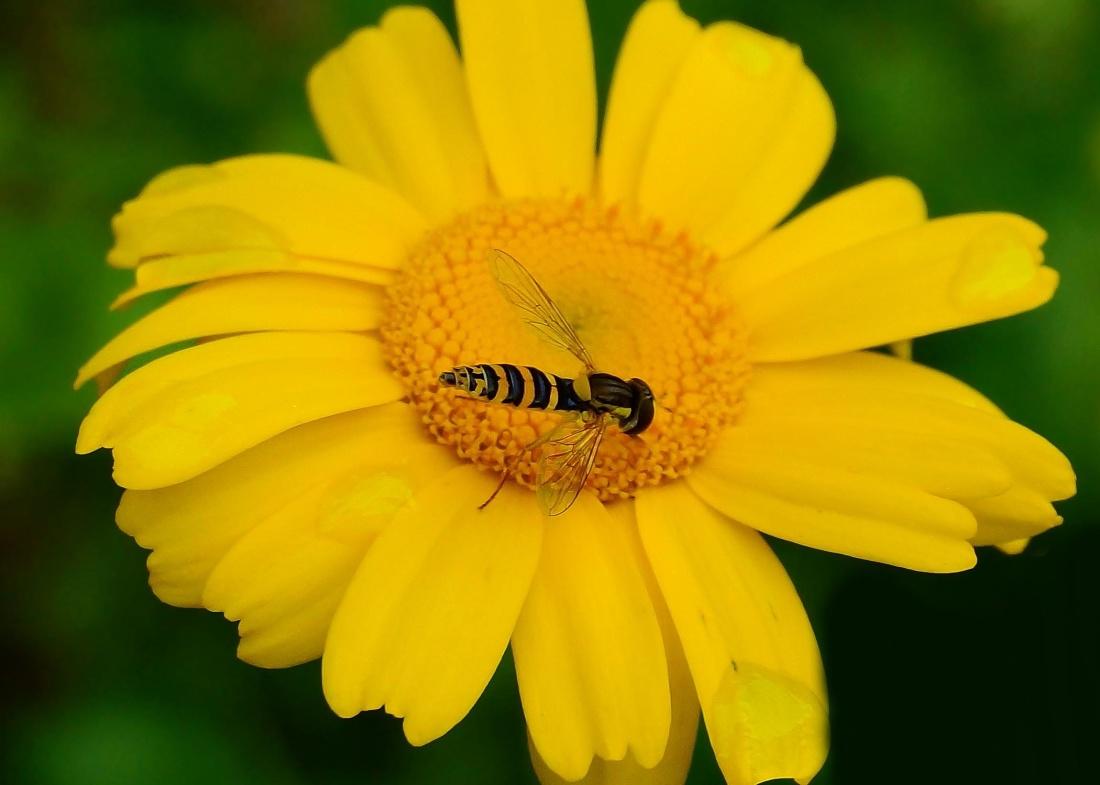 nature, flora, summer, flower, pollen, wasp, garden, hornet, insect