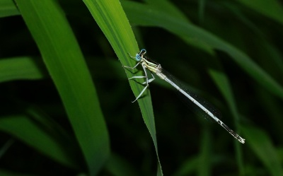 dragonfly, insect, arthropod, invertebrate, macro, leaf, details, animal