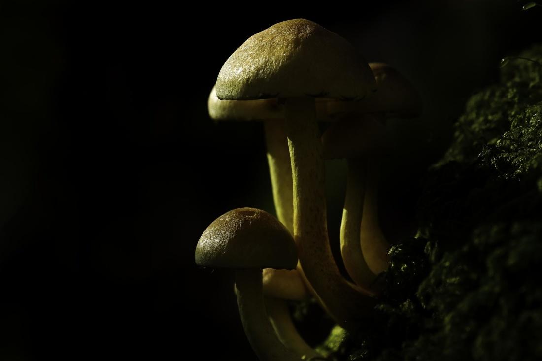 mushroom, fungus, food, moss, nature, dark