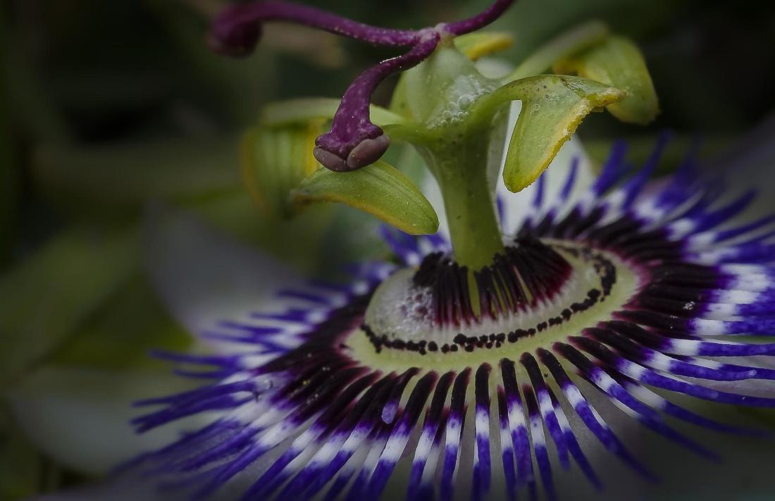 flower, nature, macro, pistil, pollen, petal, detail