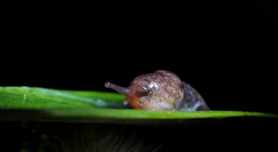 snail, gastropod, animal, macro, dark, invertebrate, wildlife, nature