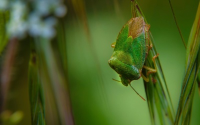 nature, leaf, insect, wildlife, grasshopper, arthropod
