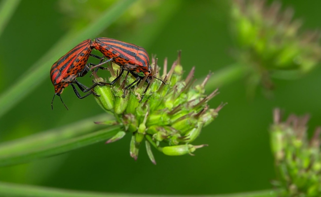 insect, nature, leaf, biology, wildlife, arthropod