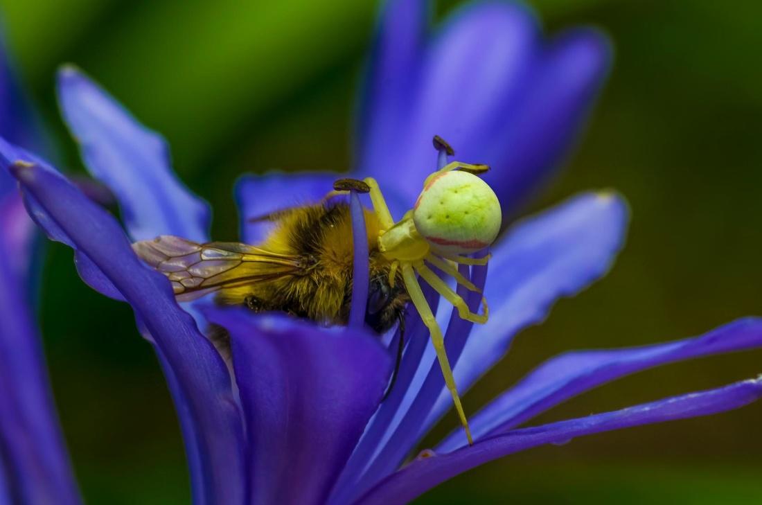 insect, nature, flower, biology, spider, pistil, bee