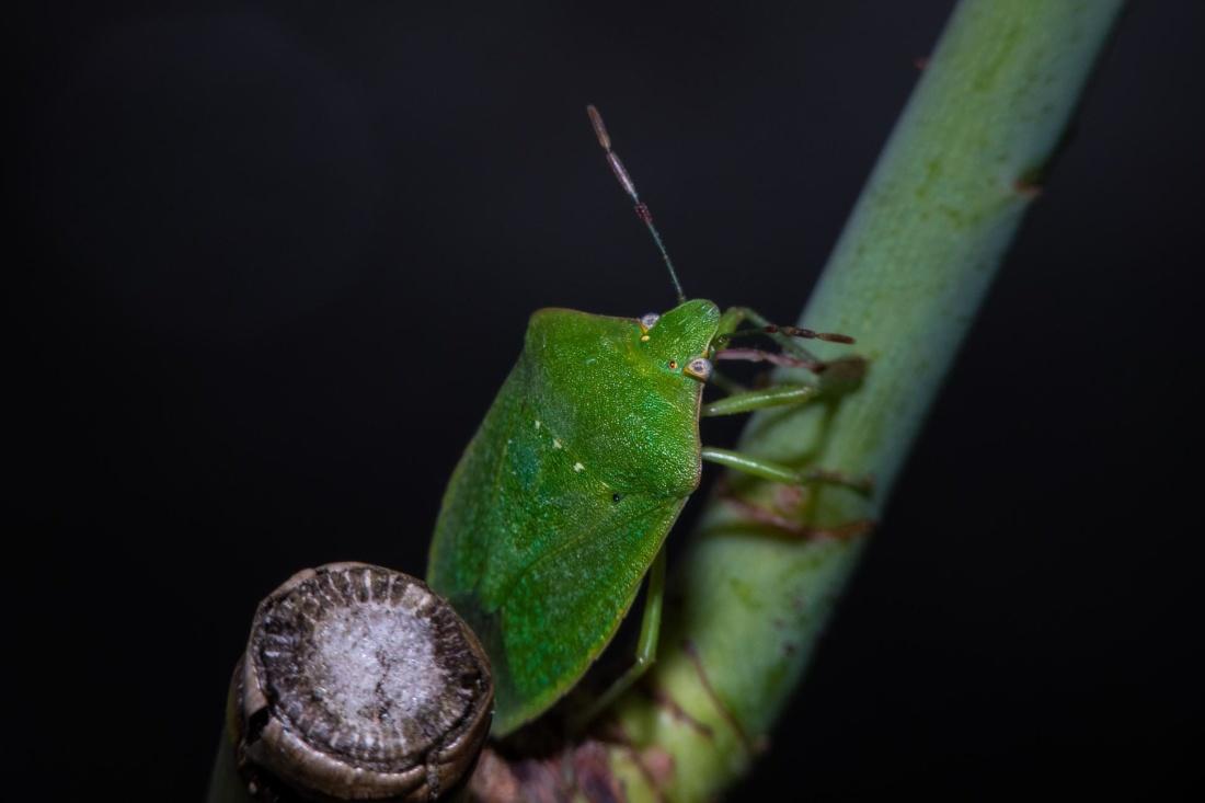insect, invertebrate, nature, arthropod, beetle, macro