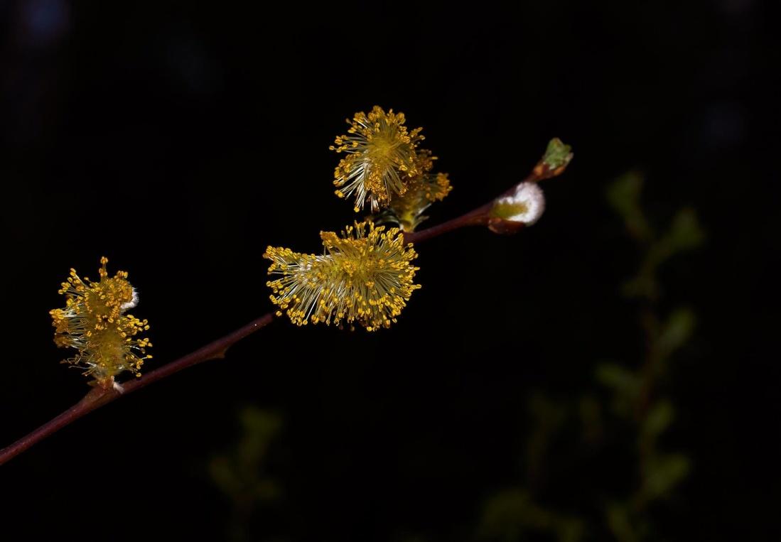 flower, nature, flora, pollen, pistil, plant, leaf