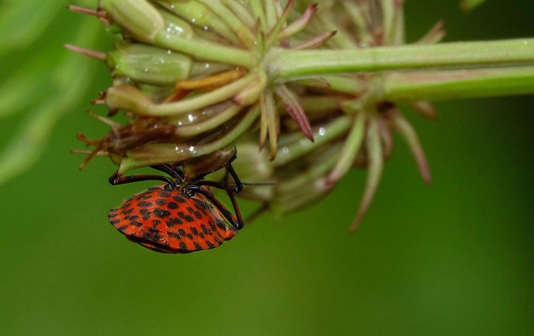 insect, nature, butterfly, macro, beetle, nature
