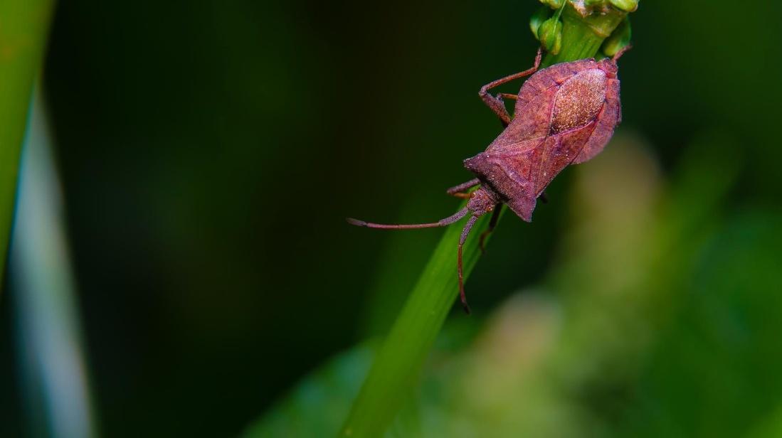 leaf, nature, insect, beetle, macro, invertebrate, flower, flora, plant, blossom